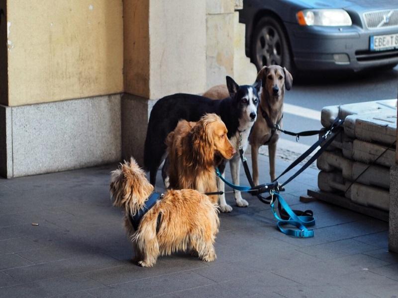 homeless pets