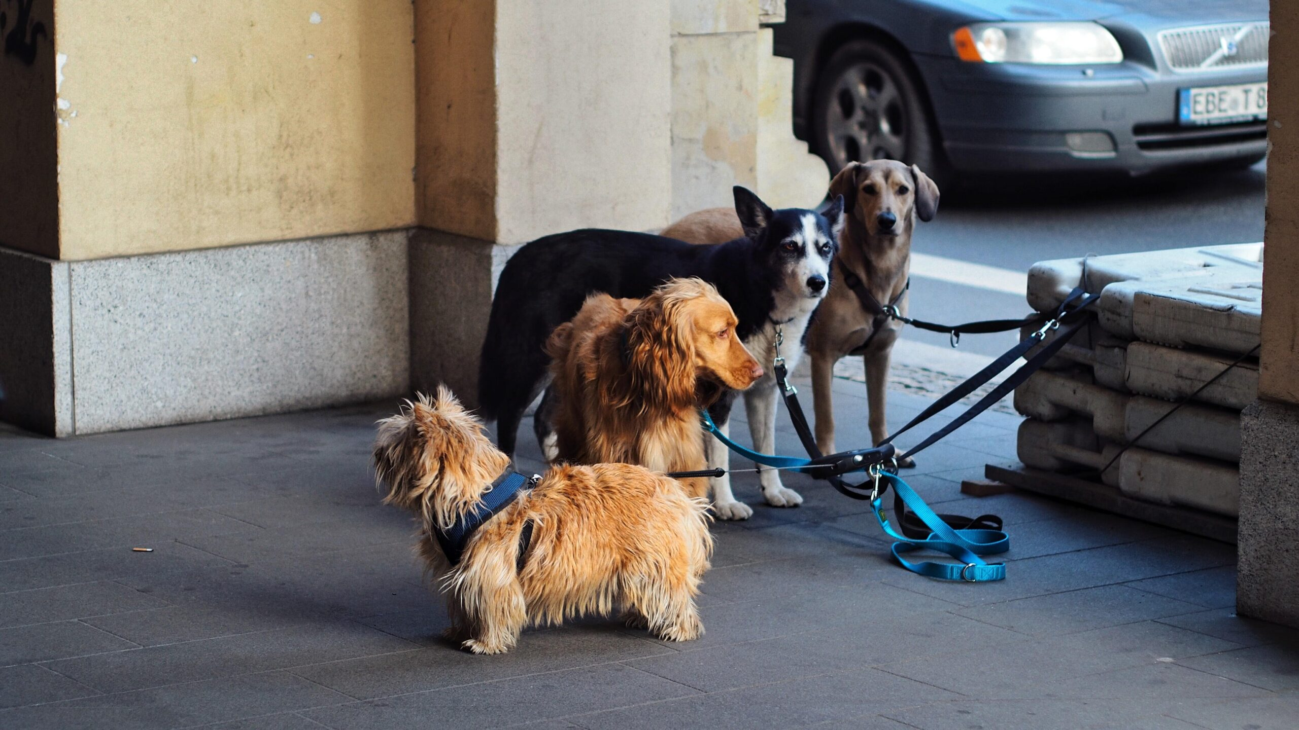 pets to the homless