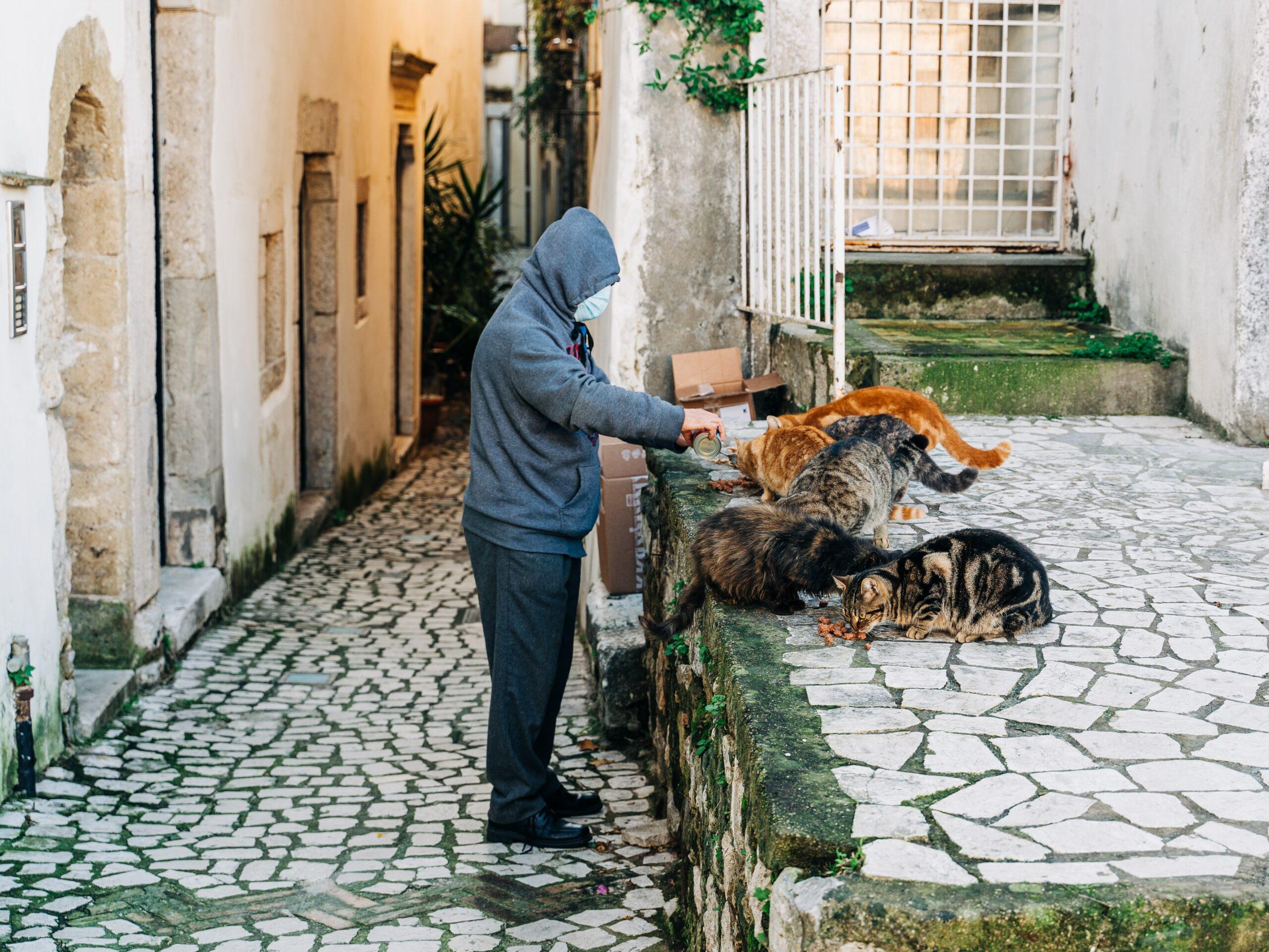 giving to animal food bank